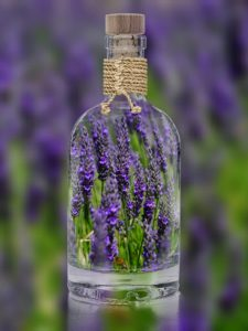 lavender-1490788